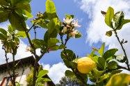 When life gives you lemons... take a photo?